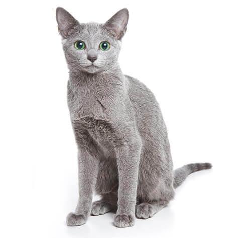 Lost Male Cat last seen Near se 15th st deerfield beach fl 33441, Deerfield Beach, FL 33441
