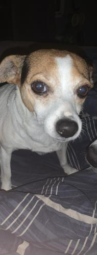 Lost Female Dog last seen Near Campbell rd , Jefferson, SC 29718