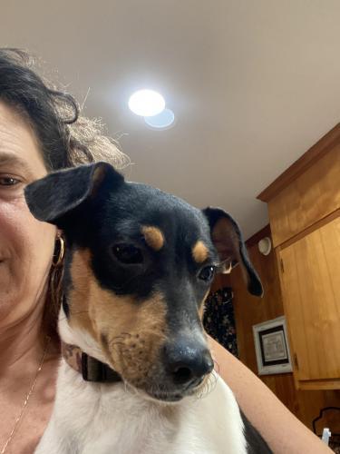 Lost Male Dog last seen Nealey Store Rd, Rock Hill, SC 29730