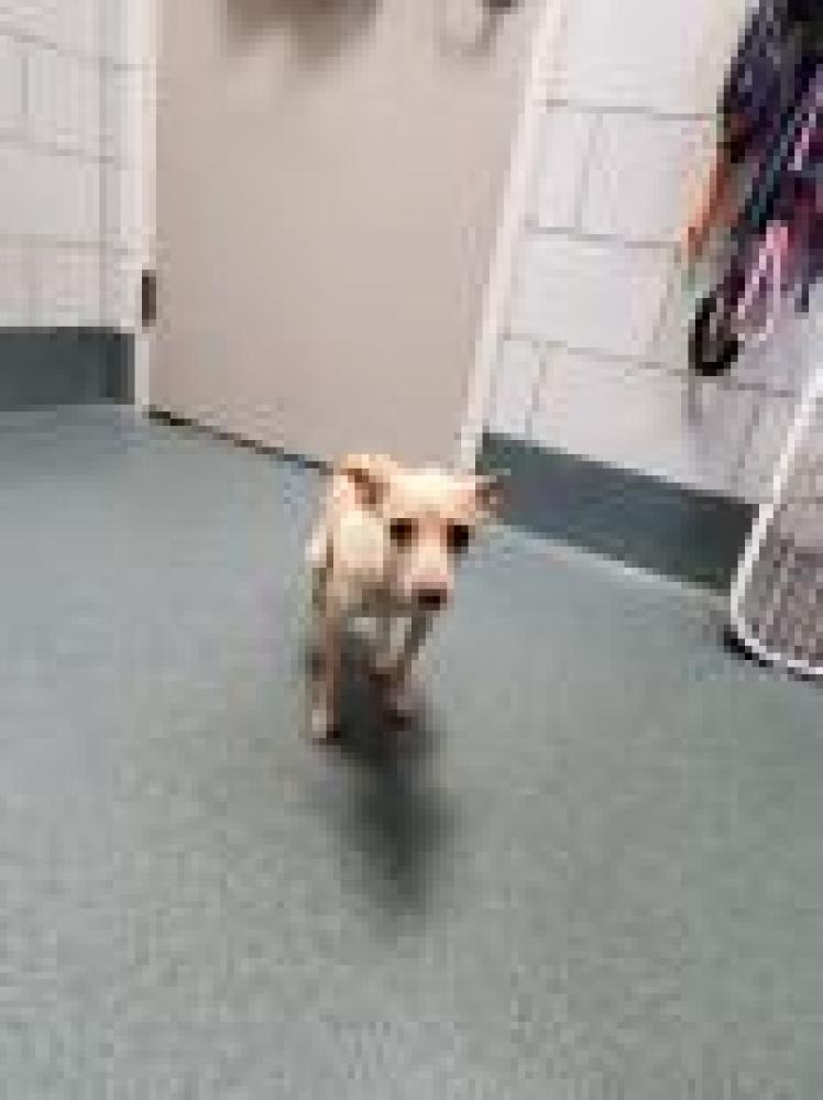 Shelter Stray Female Dog last seen West Falls Church, VA 22042, Fairfax, VA 22032
