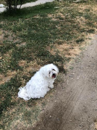 Lost Female Dog last seen On Hardt St in between Tippecanoe st and Richardson st , San Bernardino, CA 92408