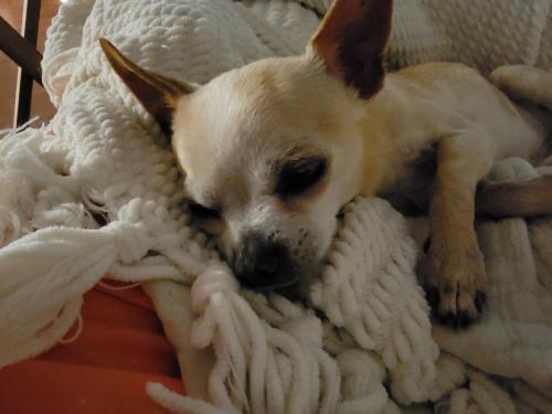 Lost Female Dog last seen Near duncan Avenue myrtle Beach sc 29572, Myrtle Beach, SC 29572
