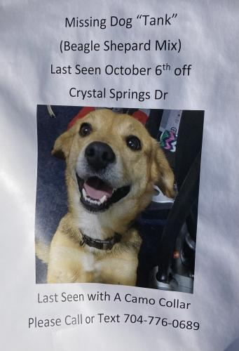 Lost Male Dog last seen Crystal Springs Road , Lexington County, SC 29073