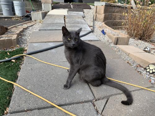 Lost Female Cat last seen Cranston , Calgary, AB T3M 1C9