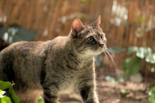 Lost Female Cat last seen E Via Linda & E Shea Blvd , Scottsdale, AZ 85259