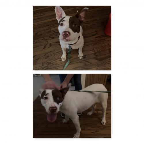 Found/Stray Female Dog last seen Near Crowley Blvd, Midland, TX 79707