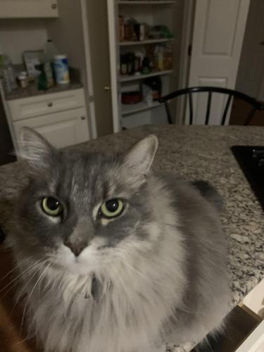 Lost Male Cat last seen Navajo Drive near Russel Branch Pkwy, Ashburn, VA 20147