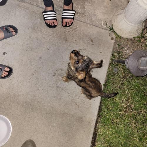Found/Stray Female Dog last seen Jurupa hills high school, Fontana, CA 92337