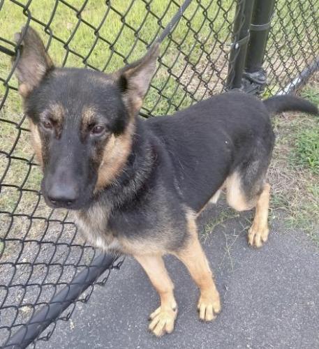 Lost Male Dog last seen Near gateway drive SE, Leesburg, VA , Leesburg, VA 20175