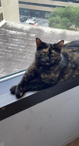 Lost Female Cat last seen Harbison West Elementary School, Columbia, SC 29212