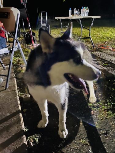 Found/Stray Female Dog last seen Allen y  Mansfield , Arlington, TX 76014