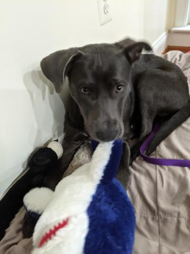 Found/Stray Female Dog last seen Lower Park Drive, Fairfax, VA 22030