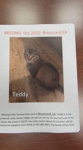 Lost Male Cat last seen Terrance oak , Broussard, LA 70518