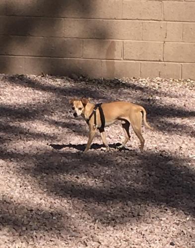 Found/Stray Unknown Dog last seen McDowell Road & 41st Ave, Phoenix, AZ 85009