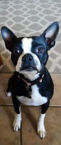 Lost Female Dog last seen Near E Hampton Ave, Mesa AZ 85204, Mesa, AZ 85210