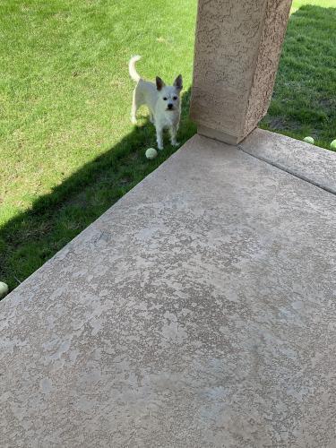 Found/Stray Male Dog last seen Power & Superstition Springs Blvd, Mesa, AZ 85209