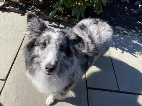 Lost Female Dog last seen by the water treatment plant in leesburg outside of red rock neighborhood, could have been headed towards river creek, Leesburg, VA 20176