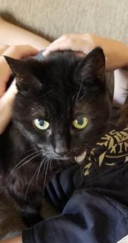 Lost Female Cat last seen East Colter and 40th Place, Phoenix, Phoenix, AZ 85018