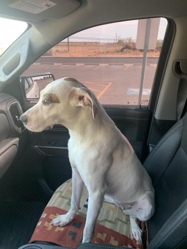 Found/Stray Unknown Dog last seen Rocky Lane, Odessa, TX 79762