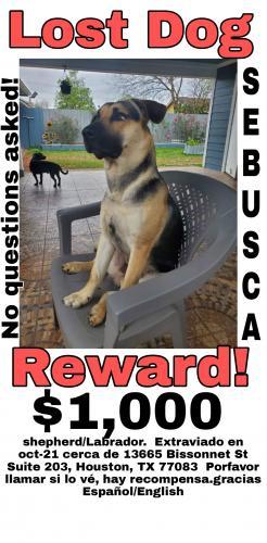 Lost Male Dog last seen Near bissonnet st, Houston, TX 77083