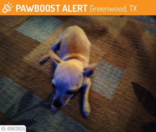 Lost Male Dog last seen Greenwood, TX 79706 near ECR120 Greenwood Midland TX, Midland County, TX 79706