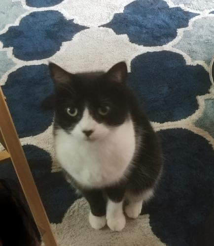 Lost Female Cat last seen Cypresswood & E. Cypress Forest Dr, Houston, TX 77070