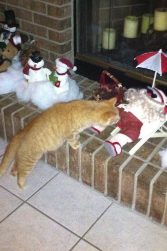 Lost Male Cat last seen Near N Old Mill Dr, Deltona, FL 32725