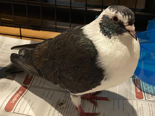 Found/Stray Unknown Bird last seen Near Waterview Plaza Sterling, VA 20166, Sterling, VA 20164