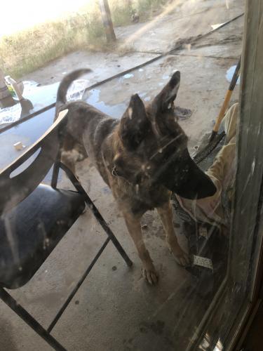 Found/Stray Male Dog last seen El Oso park, Phoenix, AZ 85033