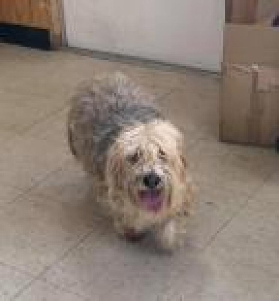 Shelter Stray Male Dog last seen Baltimore, MD 21223, Baltimore, MD 21201