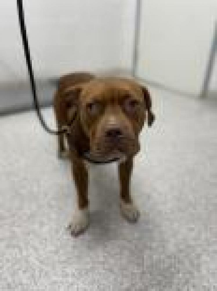 Shelter Stray Female Dog last seen Baltimore, MD 21213, Baltimore, MD 21201
