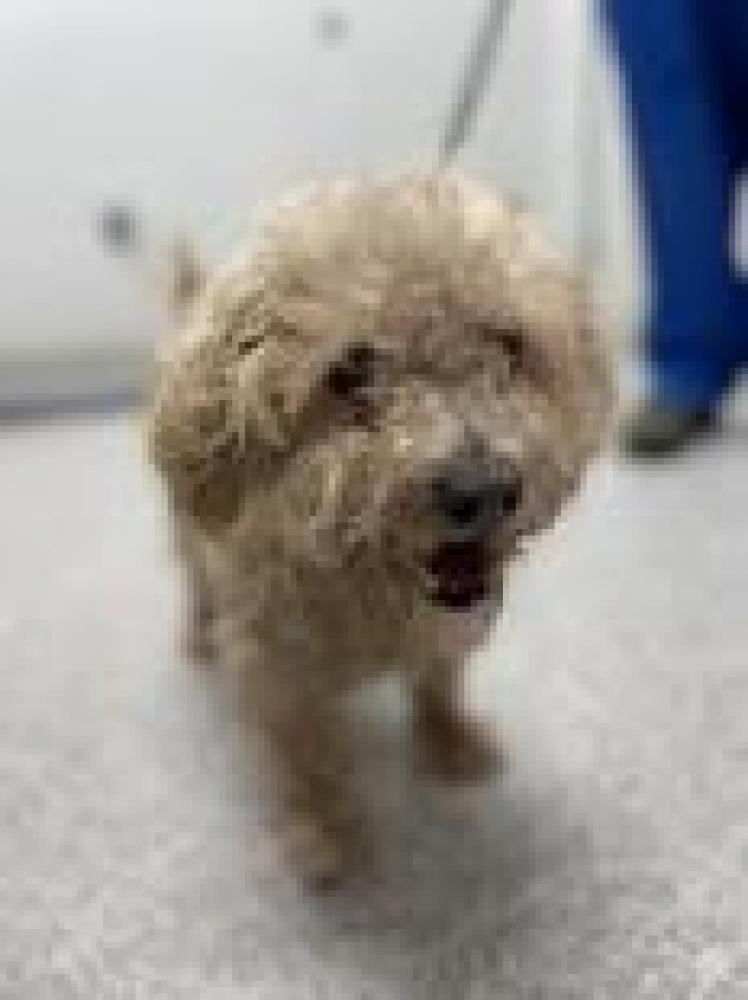 Shelter Stray Unknown Dog last seen Baltimore, MD 21205, Baltimore, MD 21201