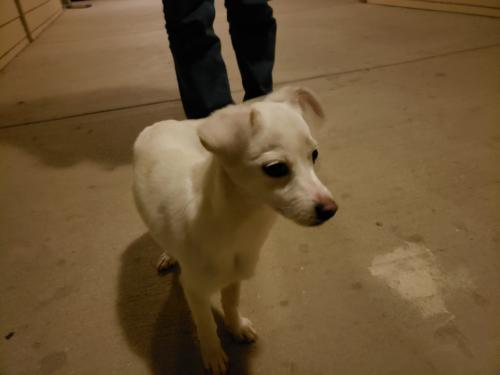 Found/Stray Male Dog last seen Riverside Pkwy & Post & Paddock Grand Prairie TX, Grand Prairie, TX 75050