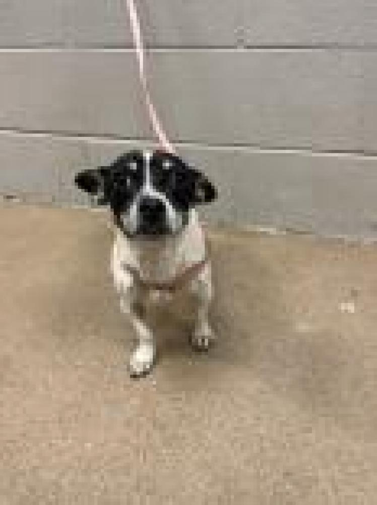 Shelter Stray Female Dog last seen Iva, SC 29655, Anderson, SC 29622