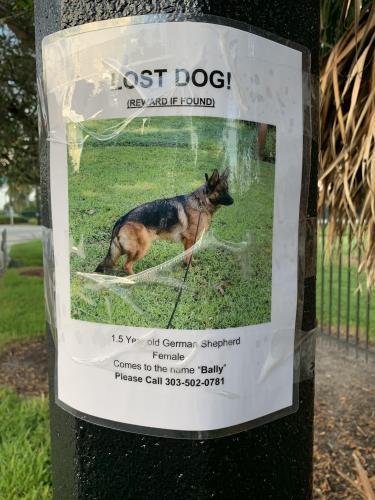 Lost Female Dog last seen ne 1st ave pompano beach FL 33060, Pompano Beach, FL 33064