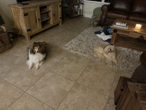Lost Female Dog last seen ormond beach near ormond lakes, Ormond Beach, FL 32175
