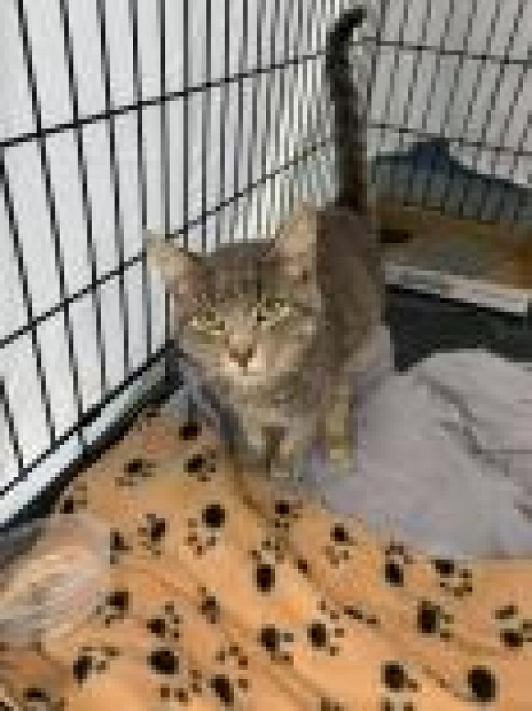 Shelter Stray Unknown Cat last seen Baltimore, MD 21213, Baltimore, MD 21201