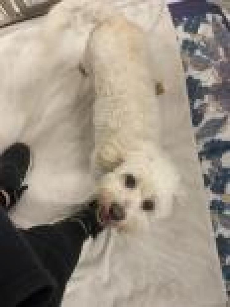 Shelter Stray Male Dog last seen Baltimore, MD 21217, Baltimore, MD 21201