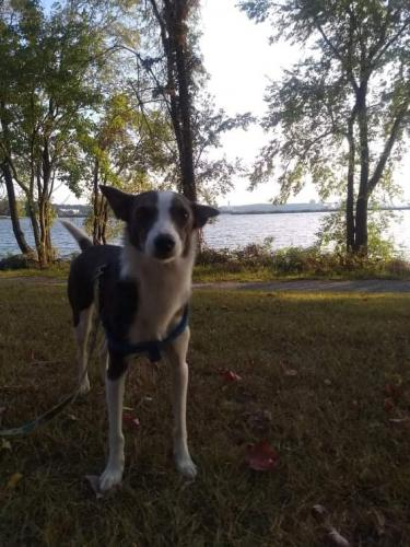 Lost Female Dog last seen Near New Utrecht Ave, Brooklyn NY 11214, Brooklyn, NY 11228