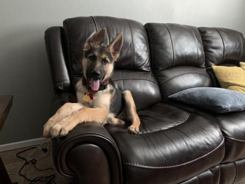 Found/Stray Male Dog last seen Thomason and Midland Dr, Midland, TX 79703