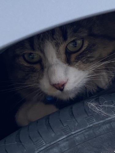 Found/Stray Unknown Cat last seen SmileFirst Dentistry, Durham, NC 27707