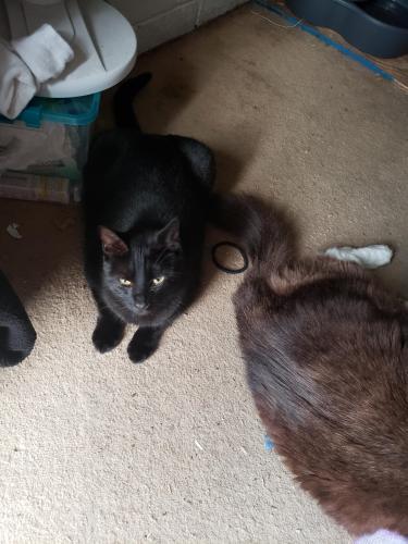 Lost Female Cat last seen Carter St Arlington TX 76014, Arlington, TX 76014