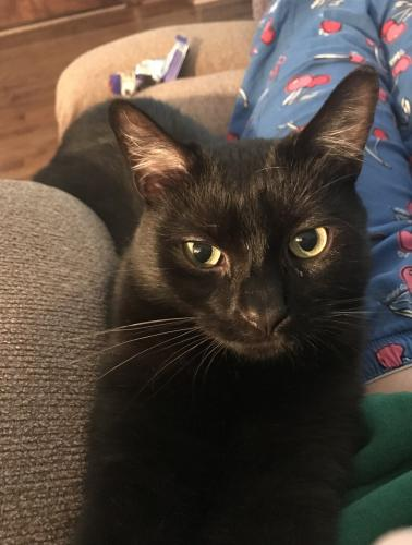 Lost Female Cat last seen 161st Street and Valleyview , Cleveland, OH 44135