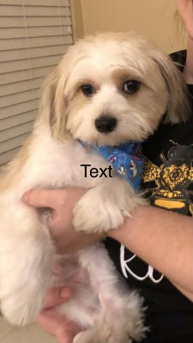 Lost Male Dog last seen Sample and Coral Springs Drive, Coral Springs, FL 33065