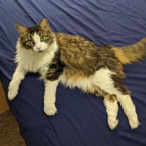 Lost Female Cat last seen Apache Blvd and Rural Rd, Tempe, AZ 85281