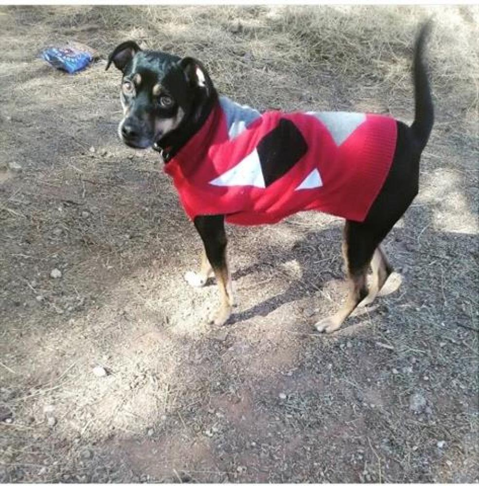 Shelter Stray Male Dog last seen , Tucson, AZ 85701