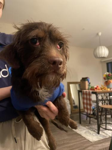 Found/Stray Male Dog last seen 5th street and Hardy, Tempe, AZ 85281