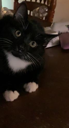 Lost Male Cat last seen Joyland , Durham, NC 27703