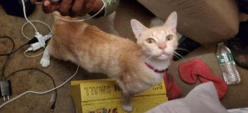 Lost Female Cat last seen Mcduffie Lane , Winnsboro, SC 29180