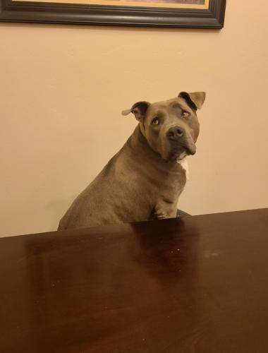 Lost Male Dog last seen Glenn/Swan, Tucson, AZ 85712